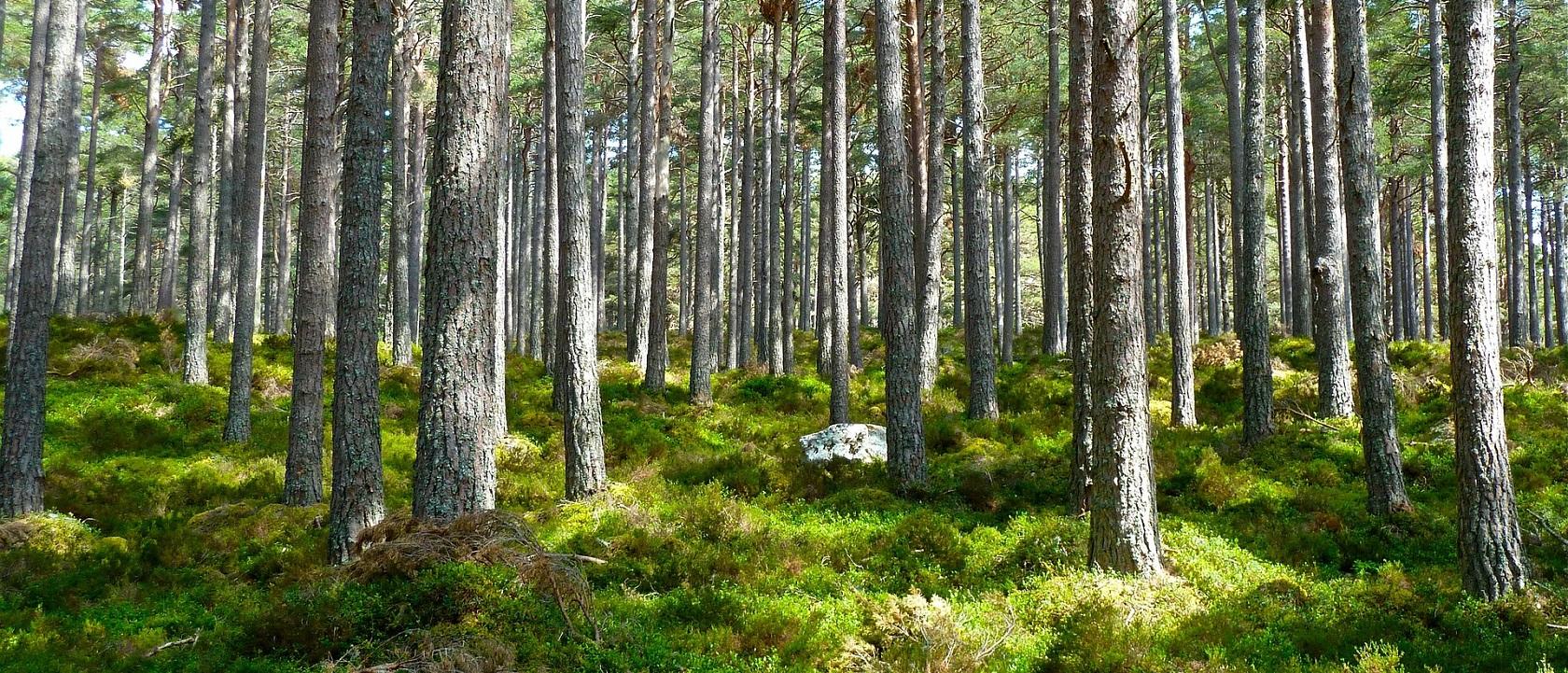 Spara miljö och skog genom nya resvanor